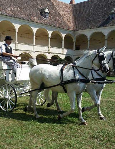 Schloss Deutschkreutz Hochzeit Schlosshof